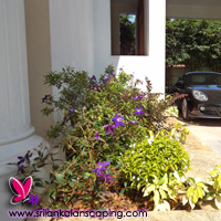 gardening sri lanka landscaping flower bucket